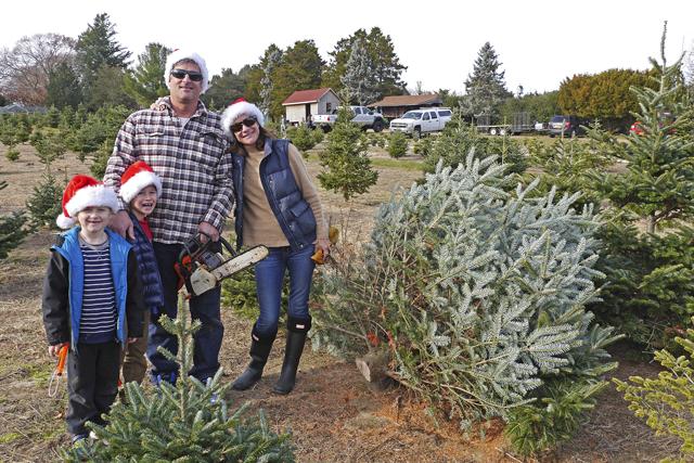 1 ... - Dart's Christmas Tree Farm - Long Island Christmas Trees